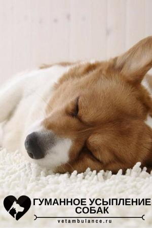 усыпление собак на дому в санкт-петербурге
