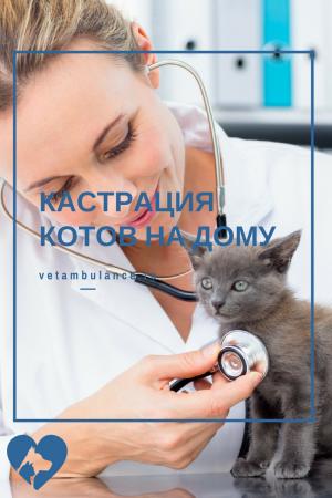 кастрация котов на дому