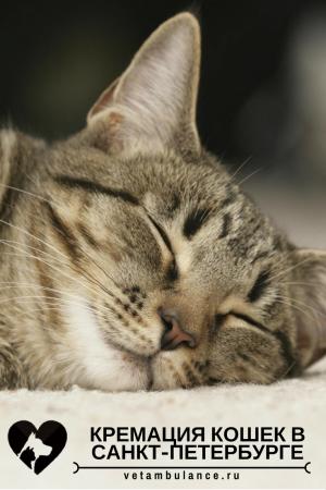 кремация кошек санкт-петербург
